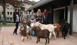 Vrijwilligers van Kinderboerderij Didam blij met predicaat. Foto: Susanne Welgraven