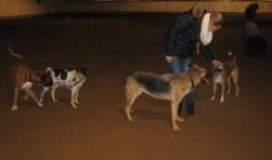 De honden kunnen zich in de rijhal heerlijk uitleven. Foto: Iris Jansen