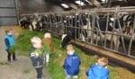 De peuters mochten de koeien voeren. Foto: PR