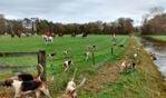 Slipjachtcomité Vorden hoopt dat publiek prachtig 'hondenwerk' te zien krijgt. Foto: PR