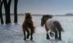 Trekpaarden in de winterwei, van Mechteld Epema. Foto: PR