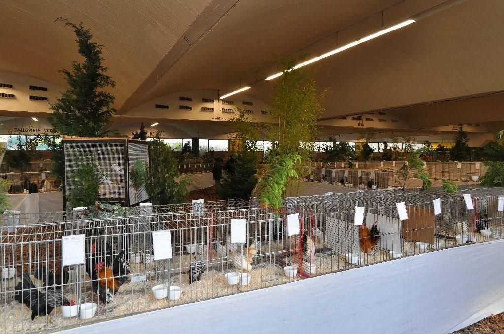 Euregio kleindiershow met record aantal dieren