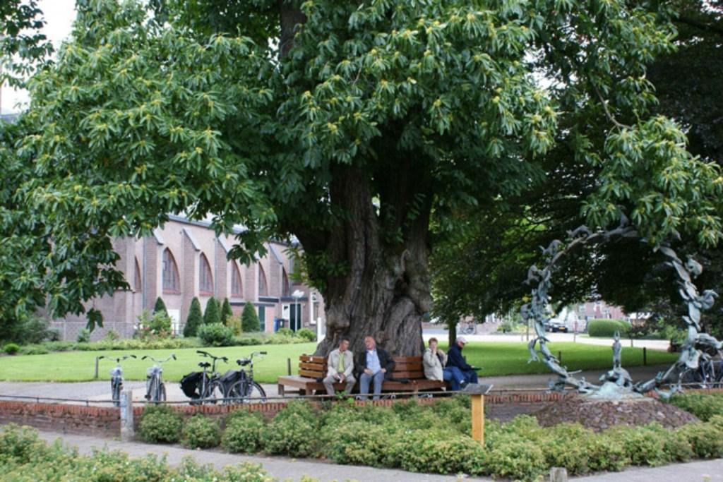 De kastanjeboom in Beltrum. Foto: Roy Nijman