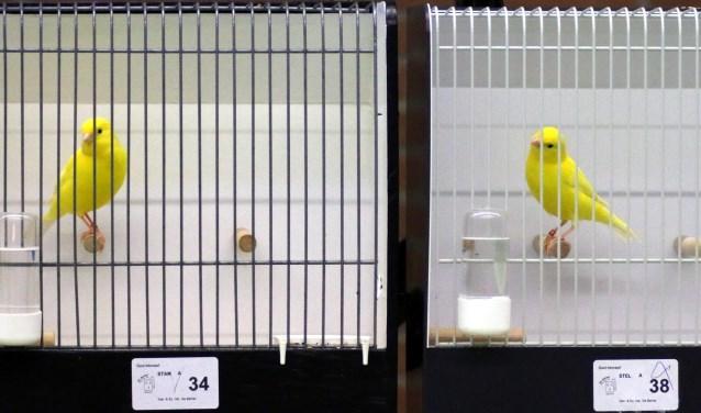 Kleurplaten Watervogels.Regionale Vogeltentoonstelling Achterhoek Nieuws Berkelland