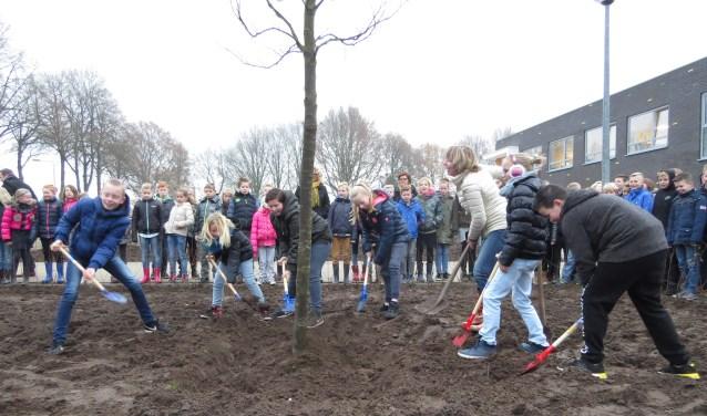 Wethouder Ingrid Lambregts plantte met zes kids van Gaanderwijs een amberboom in de tuin voor de school. Foto: Josée Gruwel