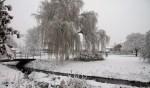 De treurwilg in het Willinkplantsoen. Foto: Ad ter Welle