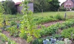 De kinderen kunnen onder deskundige begeleiding werken in hun tuintjes. Foto: PR