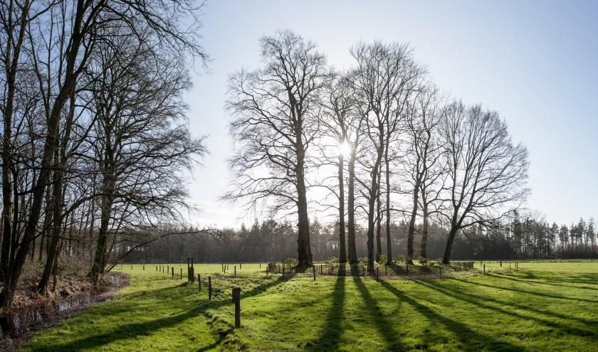 De voor velen onbekende grafheuvel van een van de Van Nispens, aan de rand van Stilli Wald in Wehl. Foto: Hans Hendriks
