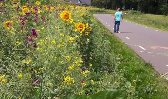 Wandelen langs bloeiende akkerranden. Foto: PR