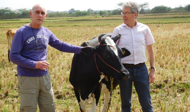 Bestuursleden Hans van 't Hullenaar en Gerard Bodde bij één vd koeien. Foto: PR