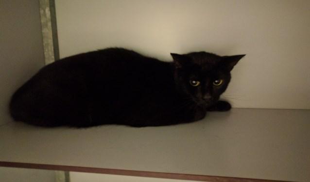De op de Hoge Hazel gevonden kat. Foto: PR