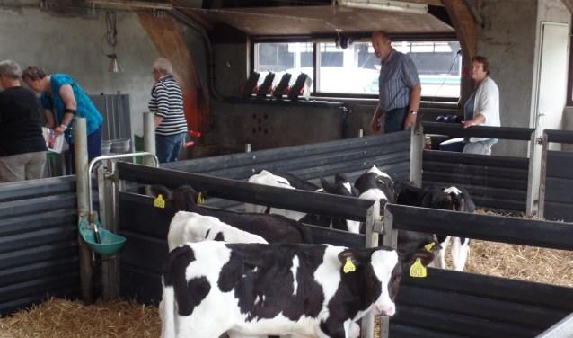 Op het bedrijf van familie Ter Maat worden 205 melkkoeien en 130 stuks jongvee.gehouden. Foto: Jan Hendriksen.