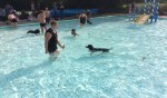 Ruim honderd honden namen zondag evenals hun baas een duik in het zwembad. Foto: PR.