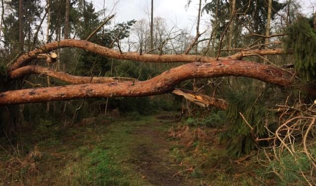 De storm heeft huisgehouden in de Achterhoekse natuurgebieden van Natuurmonumenten. Foto: Natuurmonumenten/J. Pelgrum