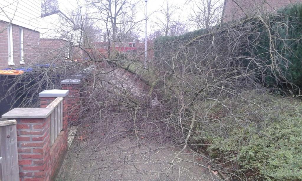De schade, veroorzaakt door de storm, op de Ruysdaelhof. Foto: Simone van Koot  © Achterhoek Nieuws b.v.