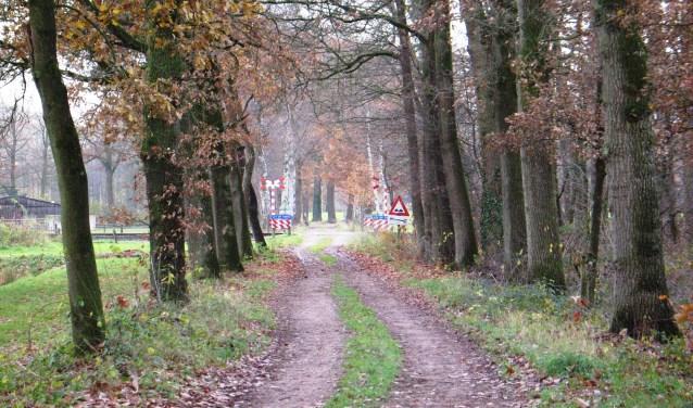 De nog onbewaakte spoorwegovergang in de Greversweg. Foto: Bernhard Harfsterkamp