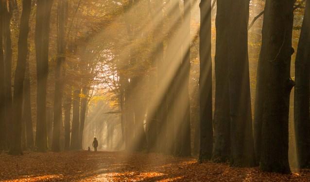 Genieten van de beweging en de natuur in de Slangenburg. Foto: Burry van den Brink
