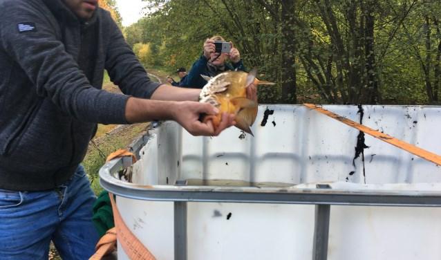 Er werd hard gewerkt om de vissen te redden. Foto: PR