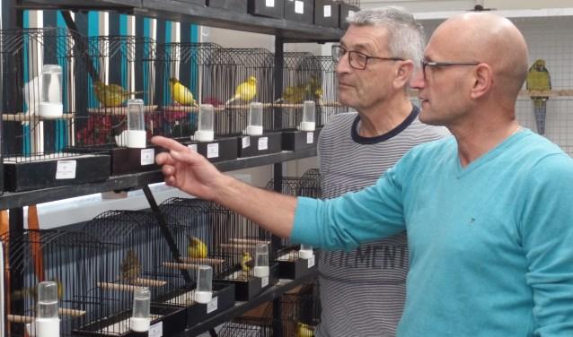 De Ruurlose leden Henk Haakmeester en Hein Blikman (r) bestuderen de Vordense/Ruurlose vogels. Foto: Jan Hendriksen.