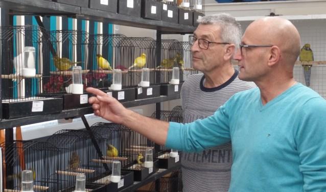 Henk Haakmeester en Hein Blikman (r) bekijken de ingebrachte vogels. Foto: Jan Hendriksen,