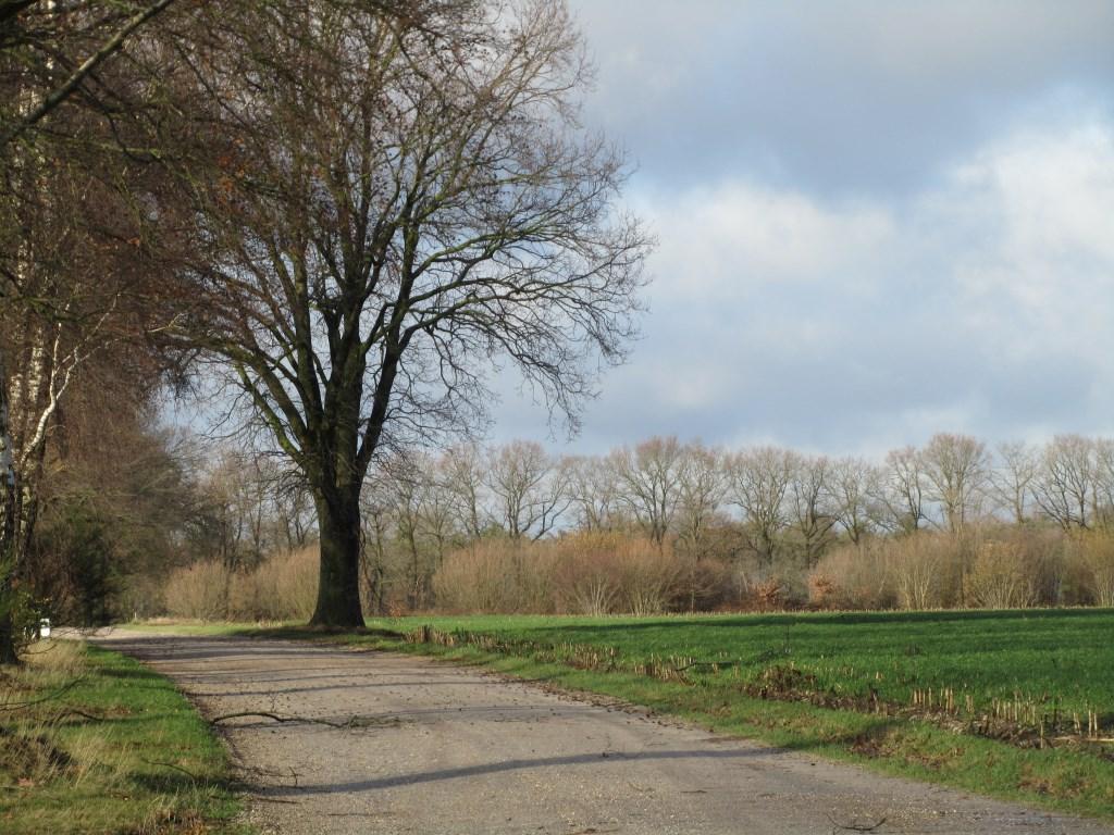 Naar links stijgt de Veldhorstweg nog iets. Foto: Bernhard Harfsterkamp  © Achterhoek Nieuws b.v.