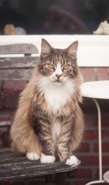 Dobby wordt vermist in de Iepenstraat. Foto: PR