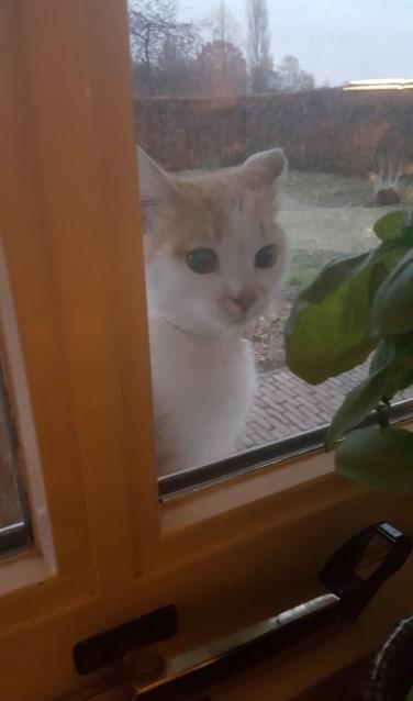 Het gevonden katje. Foto: PR