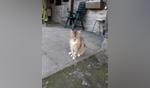 De in Geesteren gevonden kat. Foto: PR