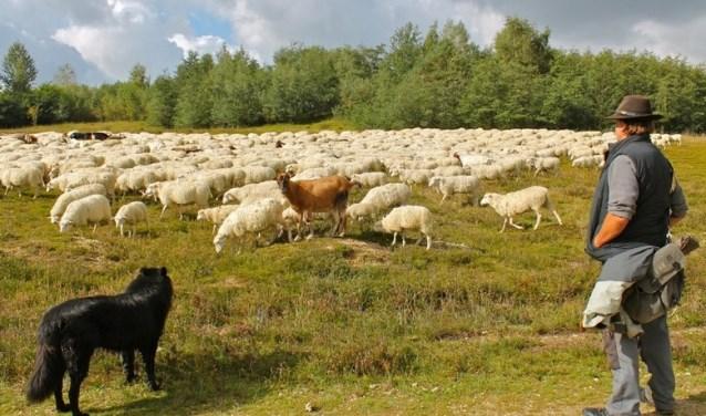 Zondag 22 april is het de dag van 'De Goede Herder'. Foto: PR
