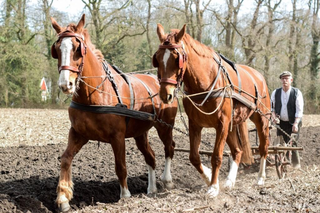 Ploegen met paarden is een precies werk Foto: Janette van Egten © Achterhoek Nieuws b.v.