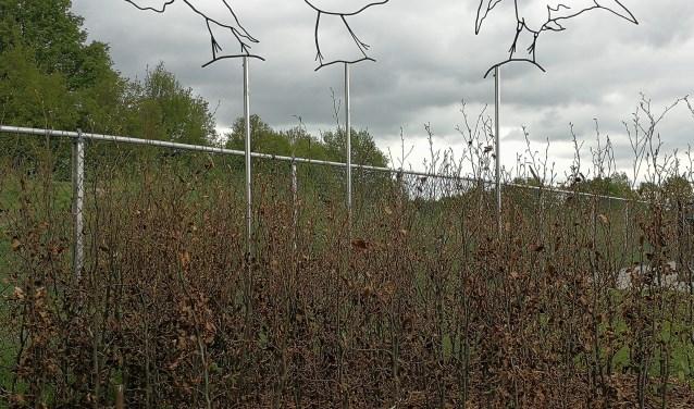 De plek op het sportpark waar de as kan worden verstrooid. Foto: PR