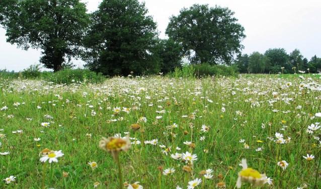 Bloemrijke weilanden zijn zeldzaam geworden. Foto: Bernhard Harfsterkamp