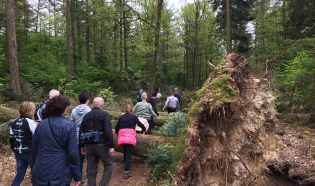 Wandeltocht in Montferland. Foto: PR