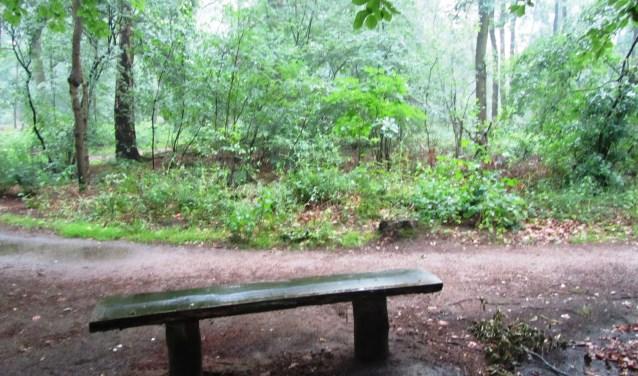 Het bankje aan de rand van het Zwarte woud. Foto: Bernhard Harfsterkamp