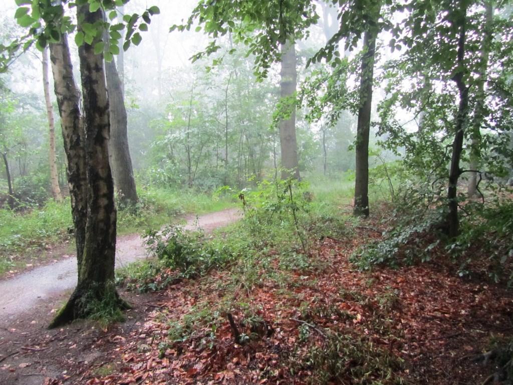Links het fietspad dat het bos in loopt. Foto: Bernhard Harfsterkamp  © Achterhoek Nieuws b.v.