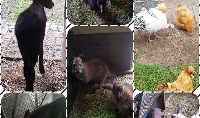 Genieten van jonge dieren in het dierenpark in Groenlo. Foto: PR