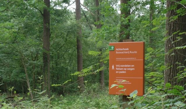 In Boswachterij Ruurlo wordt gedund en verjongd in een deel van het bos. Foto: PR