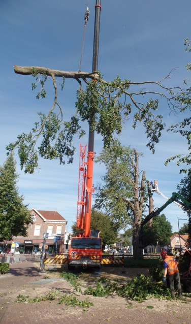 Medewerkers van Boomverzorging Zelhem 'velden' met behulp van een hoogwerker van Hoftijzer uit Aalten de markante kastanjeboom. Foto: Jan Hendriksen