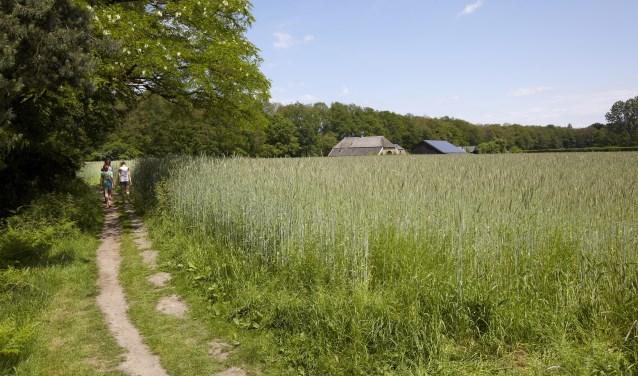 De bij Polweg 6 behorende landbouwgrond grenst aan Landgoed Hackfort van Natuurmonumenten. Foto: Laurence Delderfield