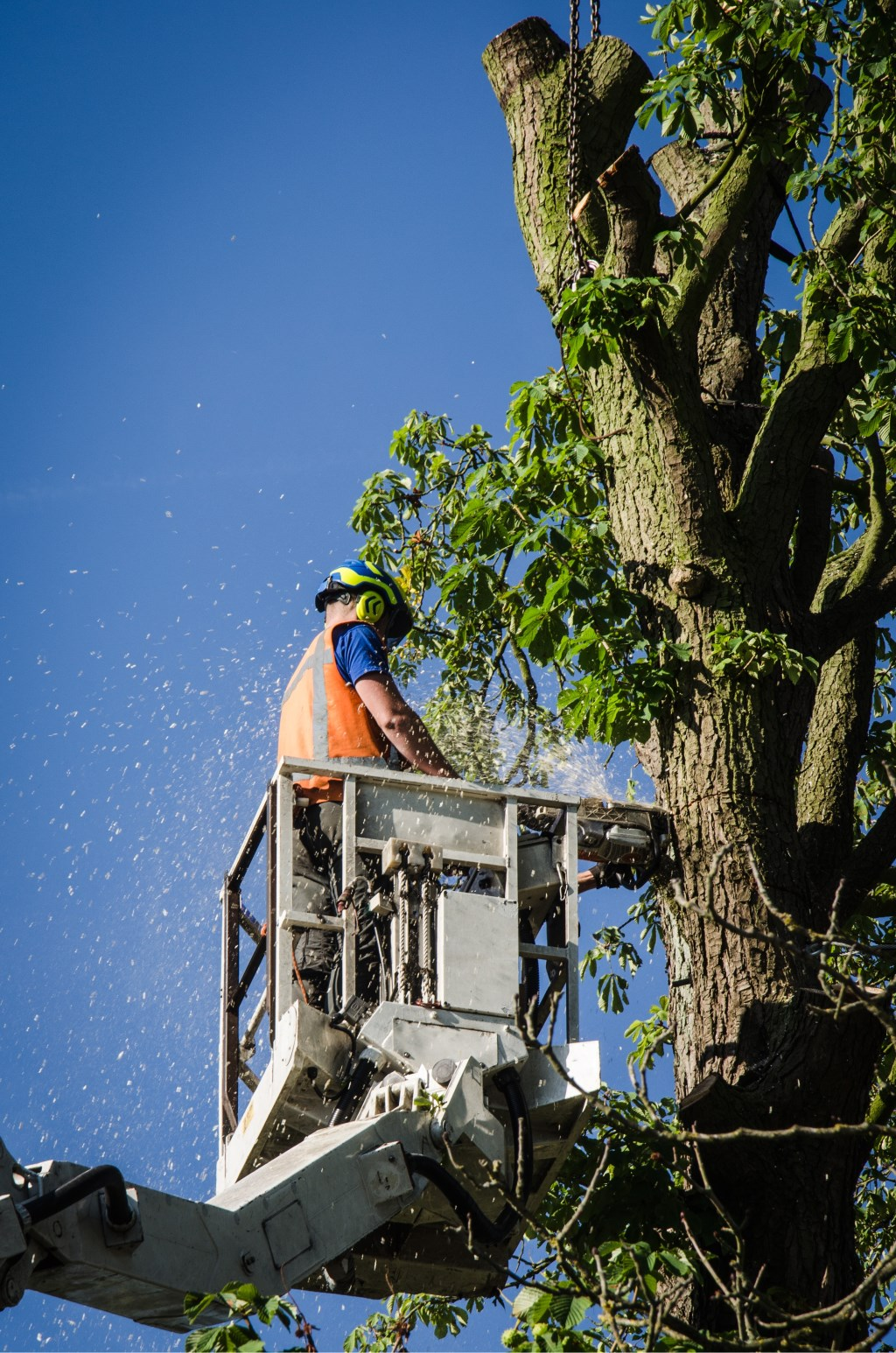 Medewerkers van Boomverzorging Zelhem halen de boom weg. Foto: Peter Tump  © Achterhoek Nieuws b.v.