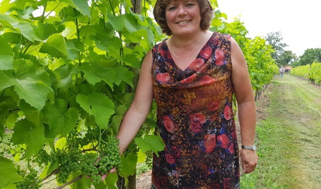 Silvia Sonderen tussen haar druivenstronken in Wijngaard Schepershof. Foto: Henri Walterbos