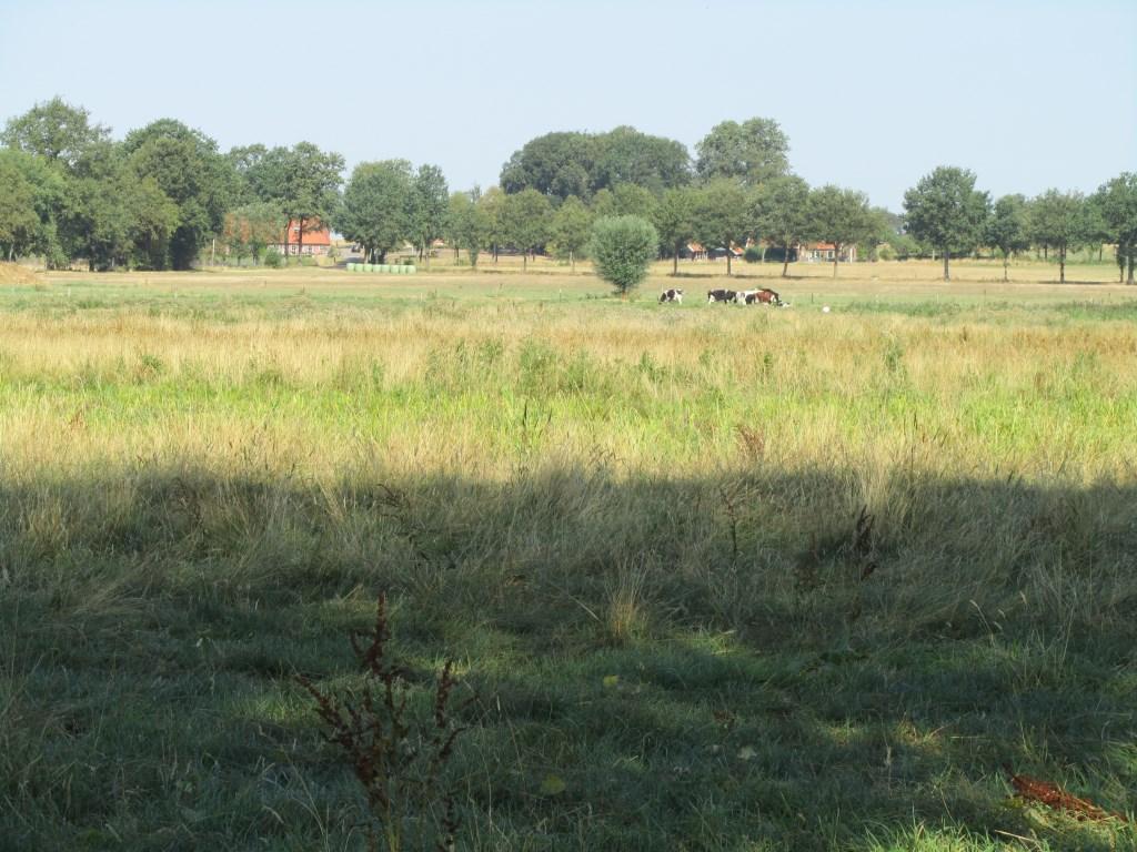 Uitzicht vanaf het bankje aan de Goordiek. Foto: Bernhard Harfsterkamp