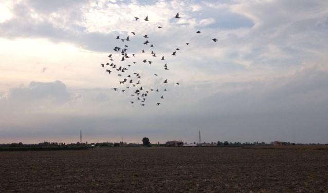 De duiven beginnen aan hun thuisreis. Foto: Robert Borneman