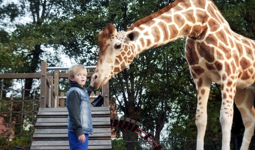 Dikkertje Dap met de giraf. Foto: PR