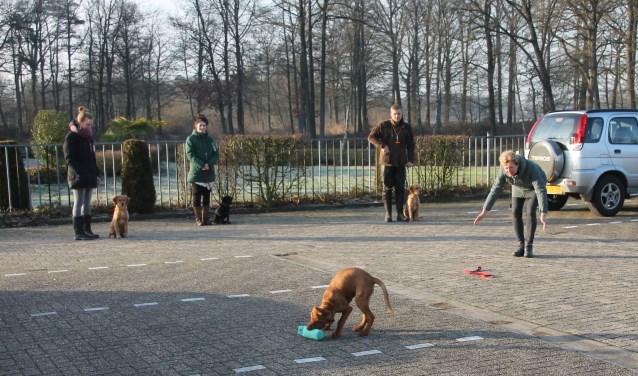 Puppy Senna bezig met een apporteeroefening, terwijl de andere pups geduldig op hun beurt wachten. Foto: Lydia ter Welle