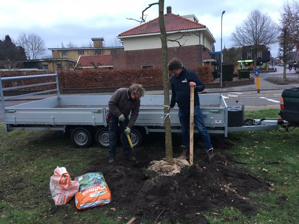 Hovenier Oswald te Dorsthorst en kweker Eltjo Rendering planten een boom op het remiseplantsoen aan de Varsseveldseweg. Foto: Barbara Pavinati  © Achterhoek Nieuws b.v.