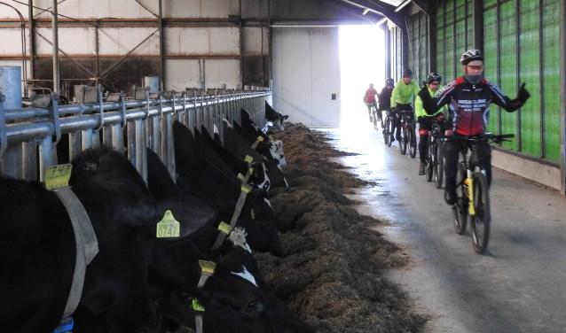 De tocht voert door een stal. Foto: Henk ter Horst