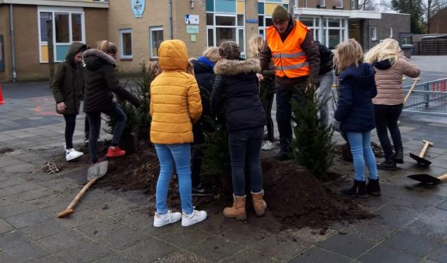 Leerlingen van groep 6/7 plantten meerdere bomen en struiken op het schoolplein. Foto: Lian Kormelink