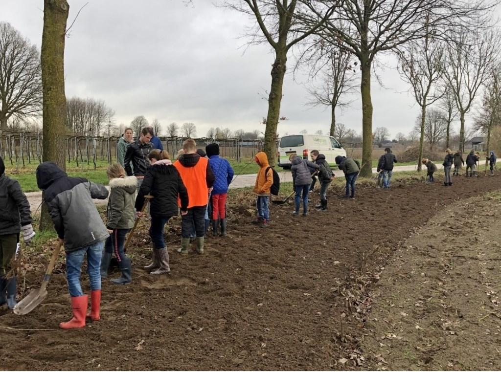 Tussen Zelhem en Keijenborg plantten zo'n 63 leerlingen meidoorns, mispels en hondsrozen plus een aantal eiken en lindes op een voormalig landbouwperceel. Foto: Gerlinde Bulten  © Achterhoek Nieuws b.v.