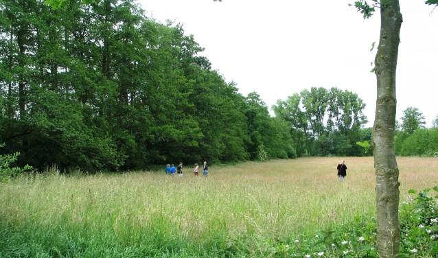 Het Aaltense Goor in juni met schoolkinderen die de natuur onderzoeken. Foto: Bernhard Harfsterkamp